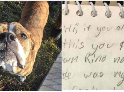 Cão é deixado para adoção com carta emocionada