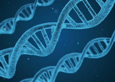 Cientistas descobrem substância que reverte envelhecimento celular
