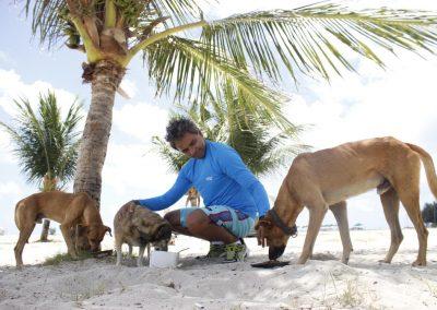 Resgate de animais abandonados: dedicação do começo ao fim
