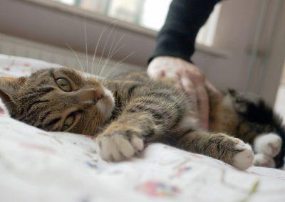 Gatos gostam mais de gente do que de comida, afirma estudo
