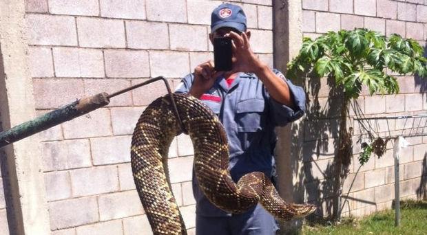 Após onda de ratos, condomínio sofre invasão de 80 cobras