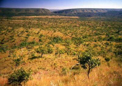 Cerrado pode ter maior extinção de plantas da história