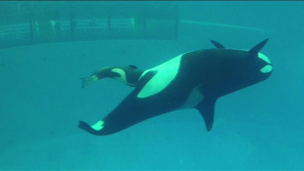 SeaWorld Parks & Entertainment/Reprodução