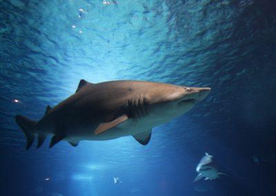 Homem dá soco em tubarão e salva esposa após ataque