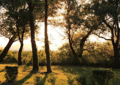 """Árvores se comunicam entre si e tem rede de """"internet"""" própria"""