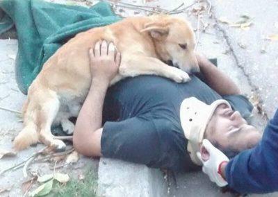 Cachorro se recusa a deixar dono após homem sofrer acidente