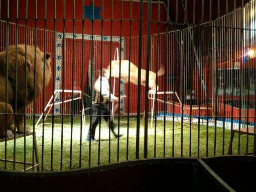 Mulher filma domador de circo sendo atacado por leão