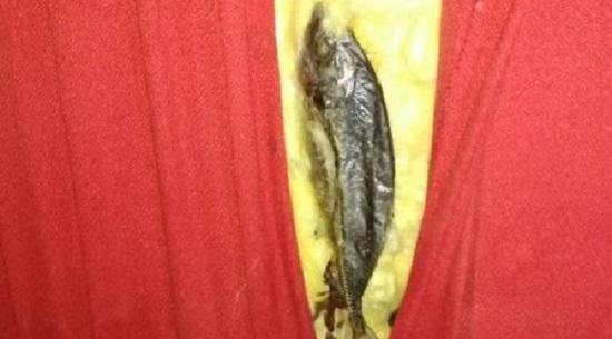 Vigilância Sanitária encontra peixes podres em paredes de sala de cinema