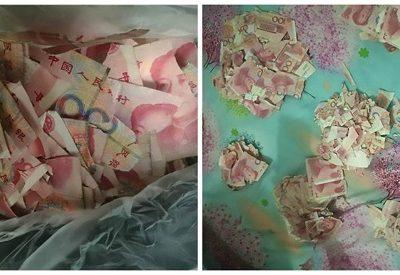 Sozinha em casa, criança rasga equivalente a R$ 23 mil
