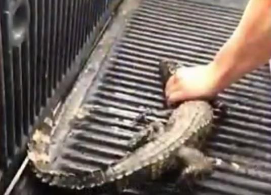 Departamento de Recursos Naturais da Carolina do Sul/Reprodução