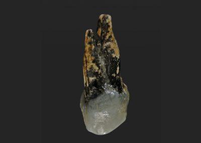 Fóssil encontrado pode reescrever surgimento da humanidade