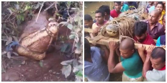 Mulher pisa em crocodilo gigante enquanto colhia ervas para fazer chá