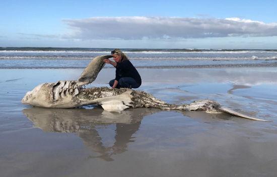 Tubarão dilacerado por orca na costa Sul Africana preocupa biólogos