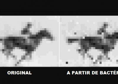 """Cientistas criam """"HD"""" de imagens em DNA de bactérias"""