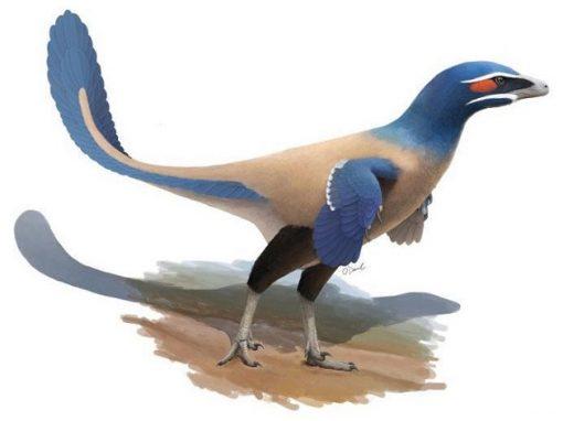 Descoberto dinossauro semelhante a ave gigante de 60 kg
