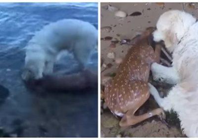 Cão salva cervo que se afogava em lago de Nova York