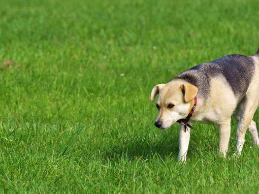 Tradutor deverá permitir conversa com cães em 10 anos