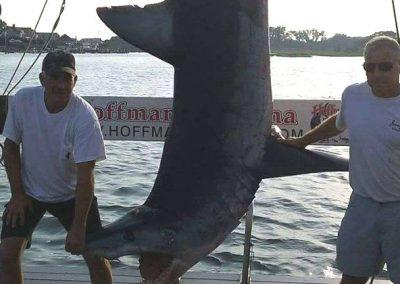 Pescadores capturam tubarão com mais de três metros