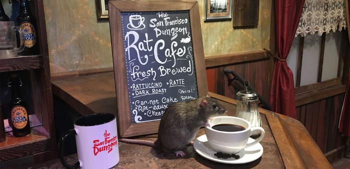 Café temático com ratos é inaugurado nos EUA