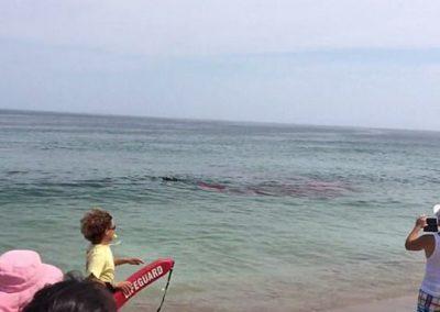 Praia fecha após banhistas filmarem tubarão atacando foca