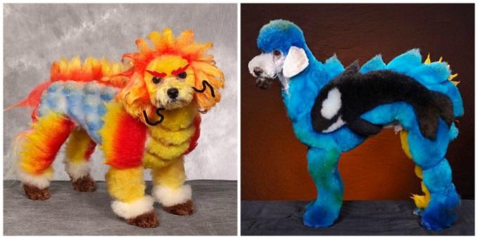 Fotógrafo registra looks extremos em competição de cachorros