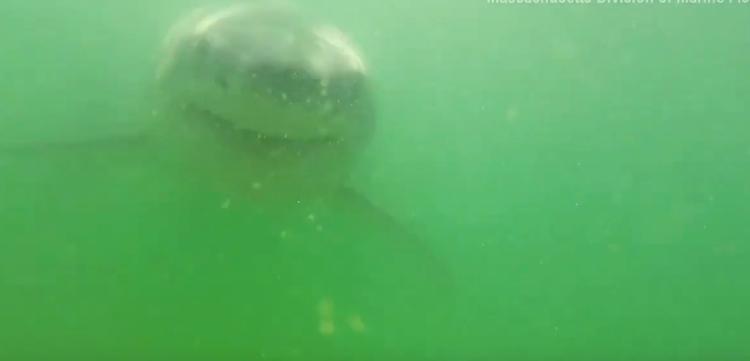 Vídeo mostra mordida de tubarão por dentro após animal atacar câmera