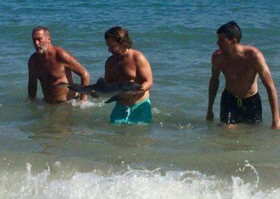 Turistas tiram golfinho do mar por fotos e animal morre