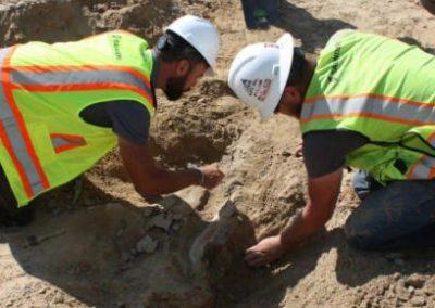Escavações encontram fósseis de dinossauros de 66 milhões de anos