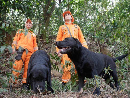 Cachorros e heróis: o cotidiano dos cães de serviço pernambucanos