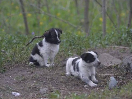 Ação tenta salvar cães abandonados em Chernobyl