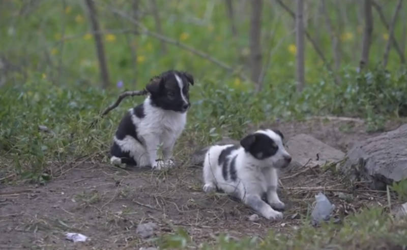 Puppies Of Chernobyl / YouTube