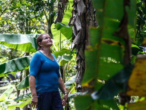 Agroflorestas: um romance que cultiva mais que amor à terra