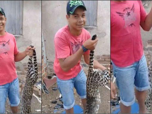 CPRH apura denúncia por vídeo de abate de felino ameaçado de extinção, no interior
