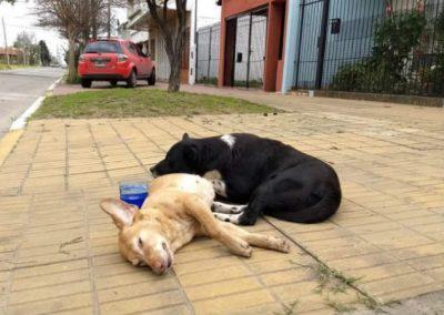 """Cão passa noite """"velando"""" cadela companheira atropelada"""