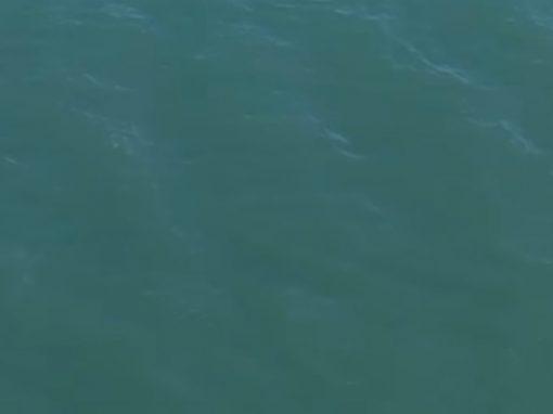 Homem foge da polícia pelo mar e nada com tubarão