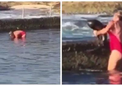 Banhista resgata tubarão nos braços para devolvê-lo ao mar