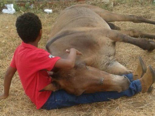Abandonado por dono após quebrar patas, burro é consolado por menino