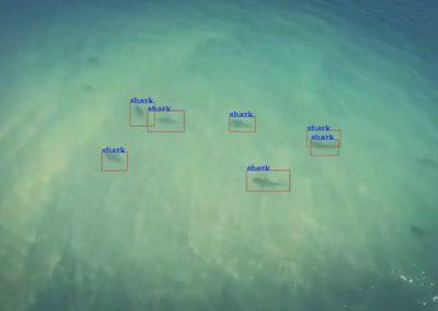 Câmeras especiais de drones são usadas em  praias para localizar tubarões próximos de banhista