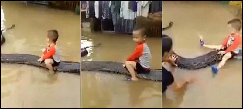 """Com os pais, menino de 3 anos brinca com cobra gigante """"de estimação"""""""