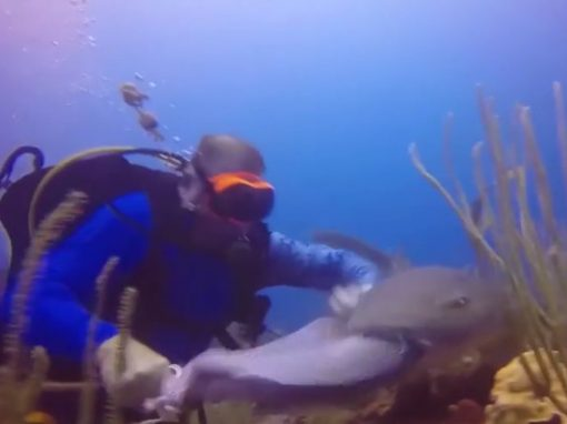 Mergulhador briga com tubarão por peixe capturado no fundo do mar
