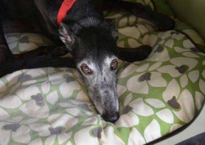 Cadela passa um mês ao lado do corpo do dono após morte dele