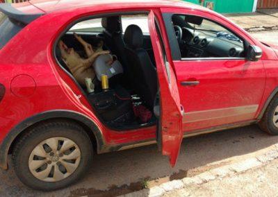 Homem é preso dirigindo bêbado e com porco morto em cadeira de bebê