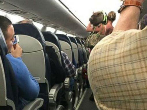 Mulher tenta embarcar em avião com porco de estimação e acaba expulsa
