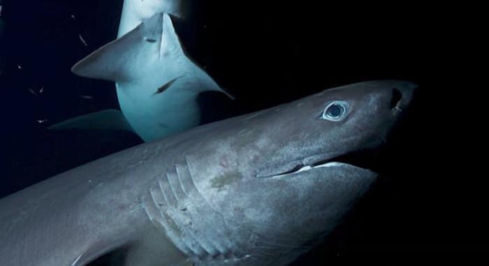Confundida com predador, equipe de TV é atacada por tubarões de 6m