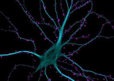 Descoberto mecanismo cerebral capaz de inibir pensamentos indesejados