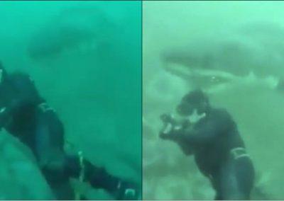De boca aberta, tubarão toca cabeça de mergulhador que filmava no oceano