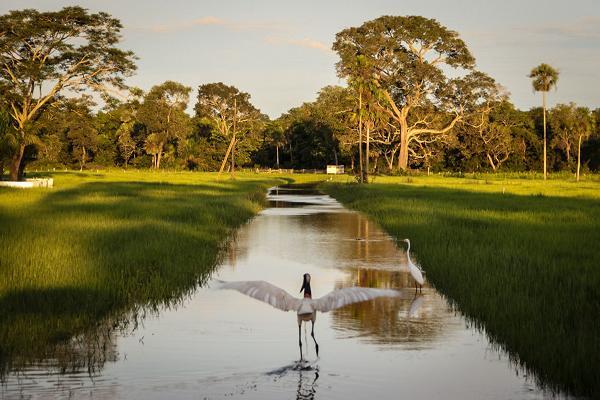 Pantanal arara Ed Wanderley_pantanal002