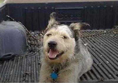 Homem com câncer faz campanha para adotarem seu cão após própria morte
