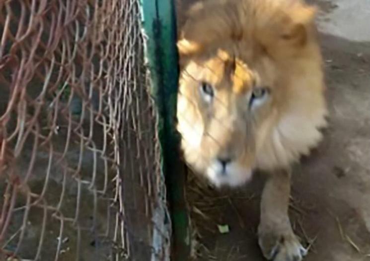 Nicolas Bravo Zoo / Divulgação