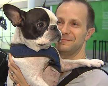 Piloto desvia rota de avião para salvar cão
